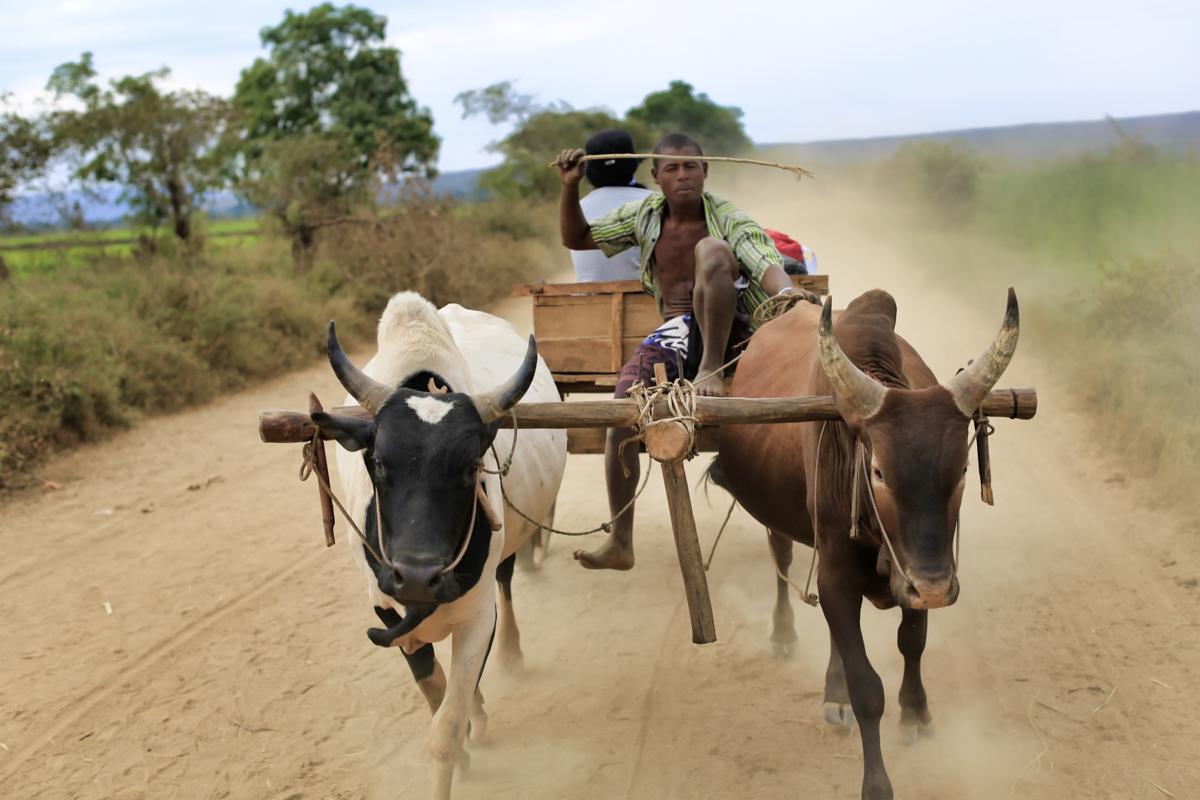 Madagaskar__glerija-14