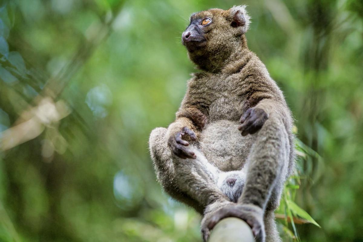 Madagaskar__glerija-18