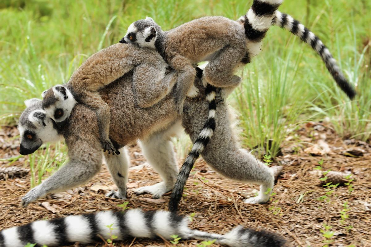 Madagaskar__glerija-24