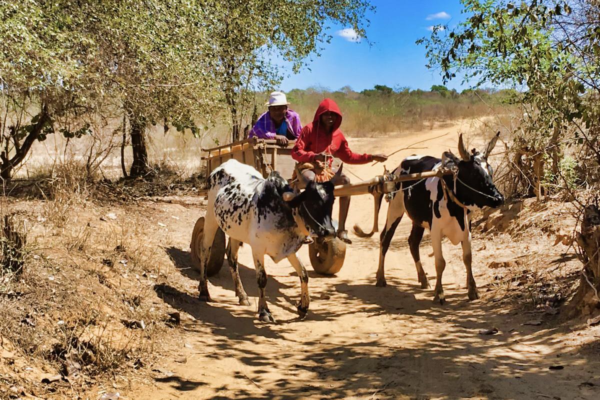 Madagaskar__glerija-39