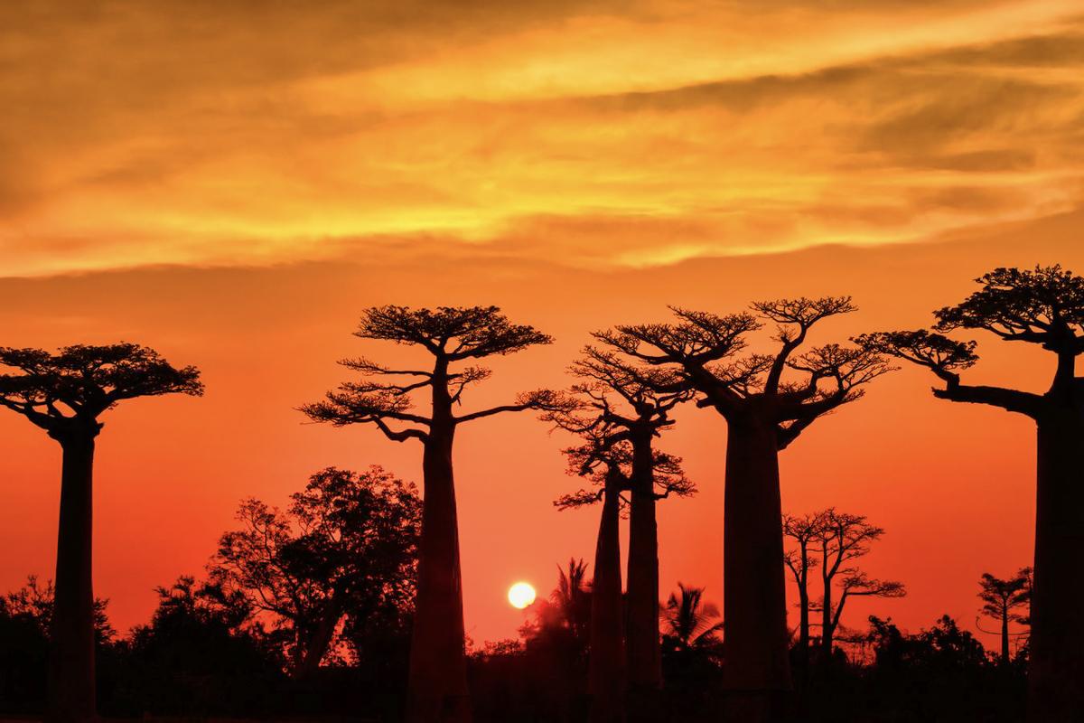 Madagaskar__glerija-41