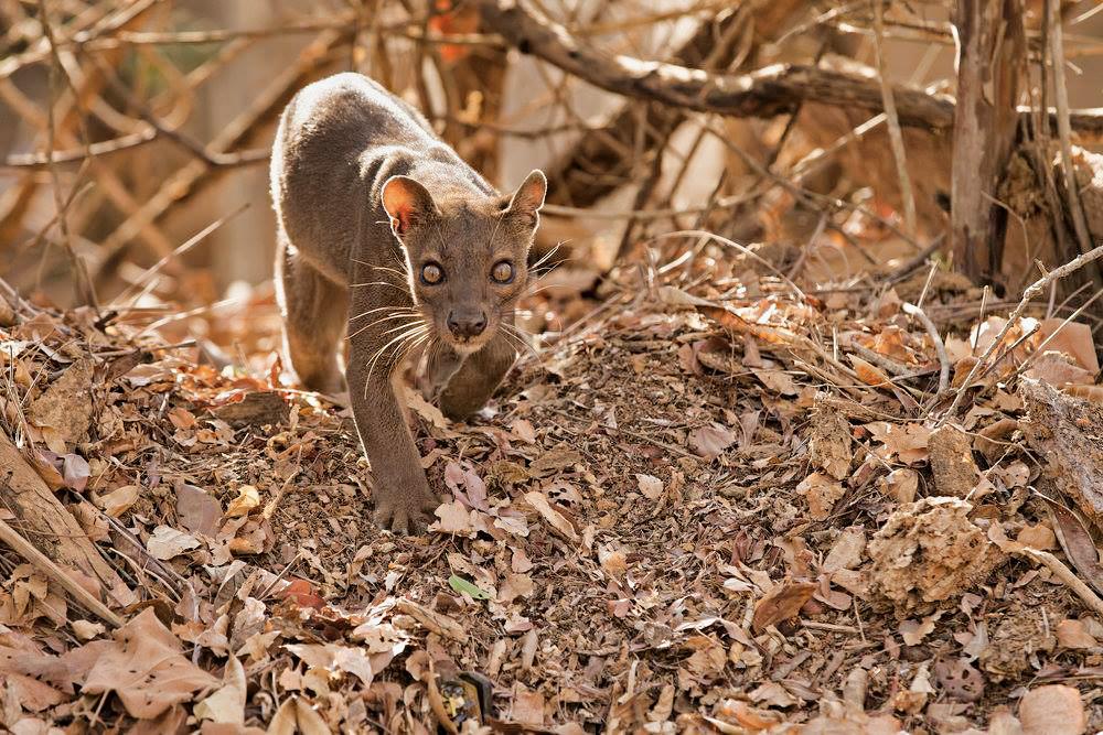 Madagaskar__glerija-48
