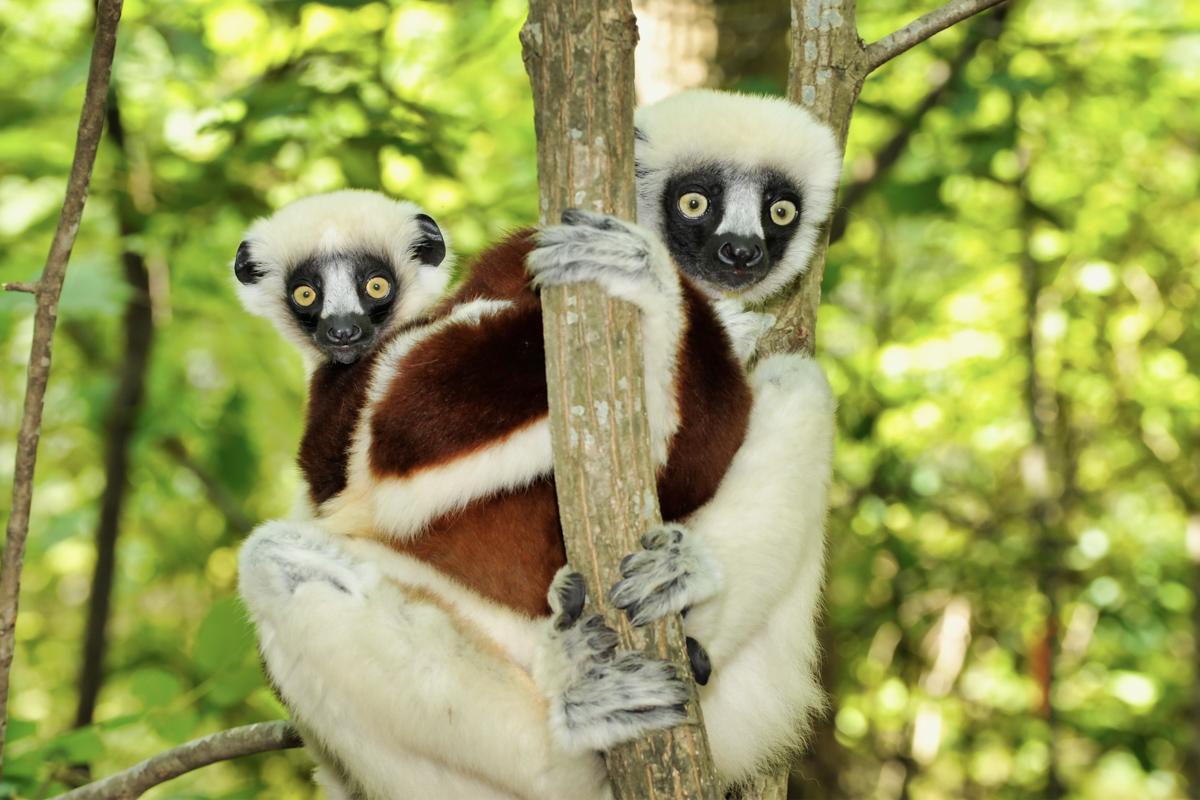 Madagaskar__glerija-50