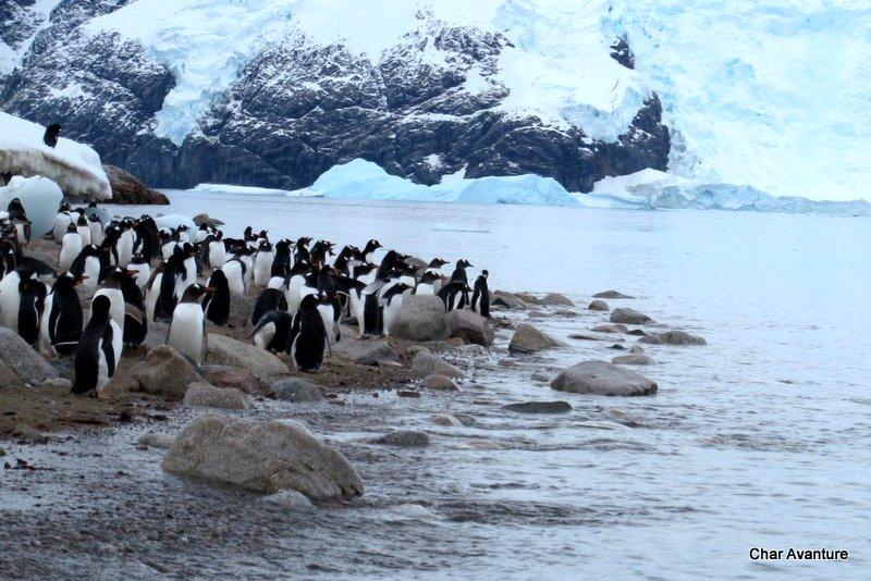 06._čakajo_nas_tudi_pinguini