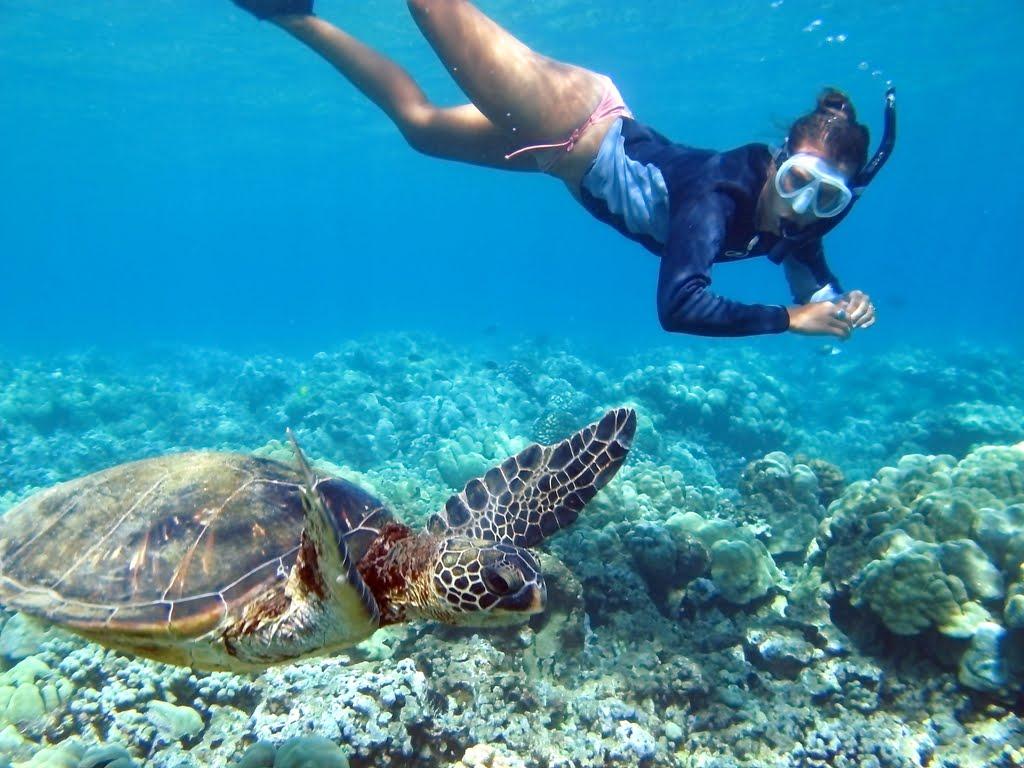 Plavanje z želvami