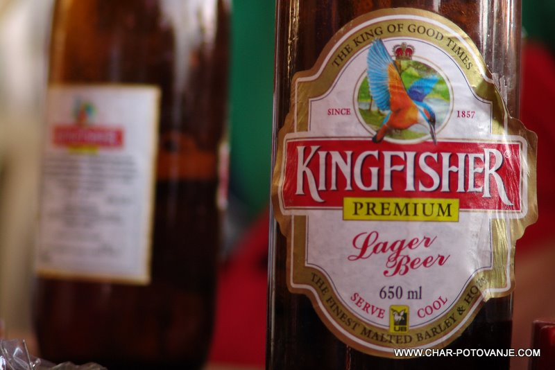 34. ter kingfisher