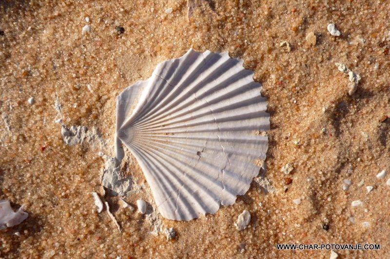 25. skoljke so ostanki starega morja v puscavi