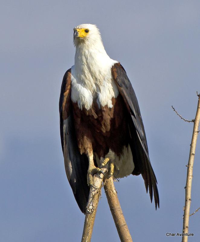 07. ptice ob jezeru chamo so svetovne