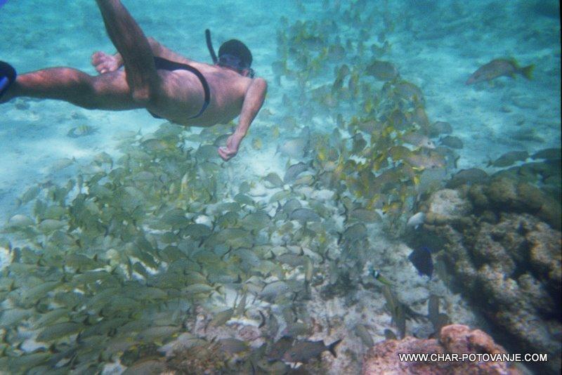 31._Snorklanje_v_Belizeju_je_nekaj_posebnega