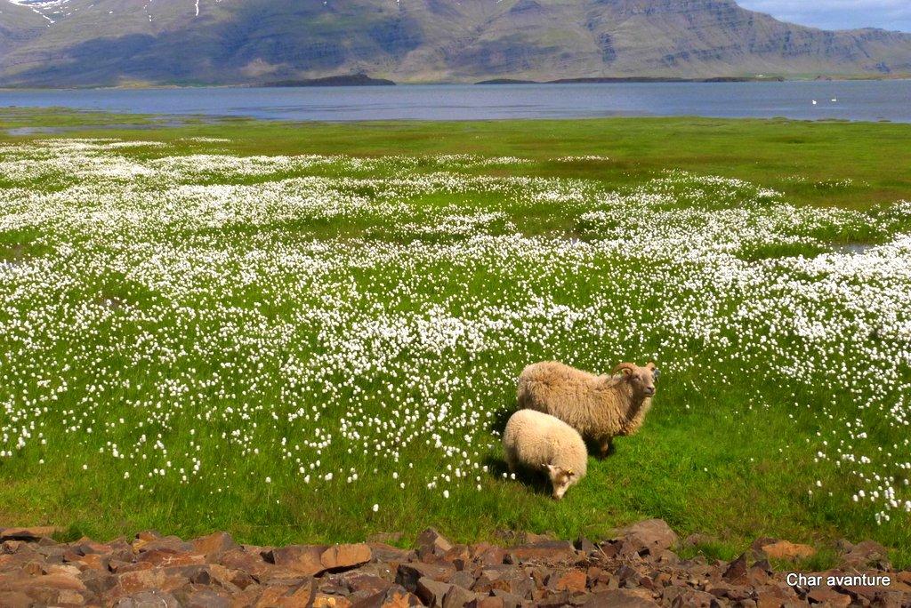 Islandija 18
