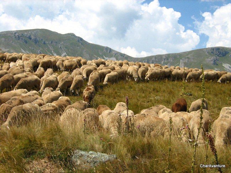 05.Sar planina in Medenica planine znane po ovcah kackavalu smuciscih