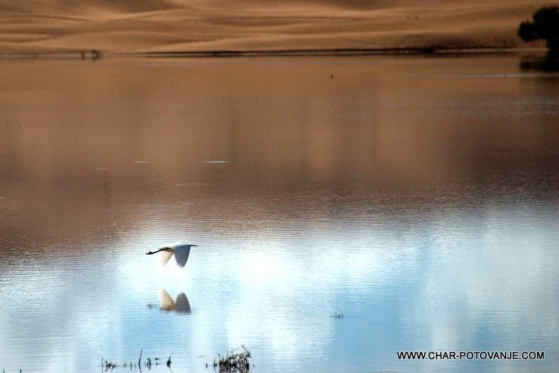 09._Veliko_je_tu_ptic_tudi_flamingi_pridejo_mimo