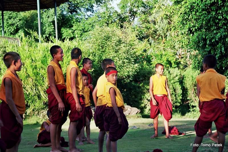 mladi menihi