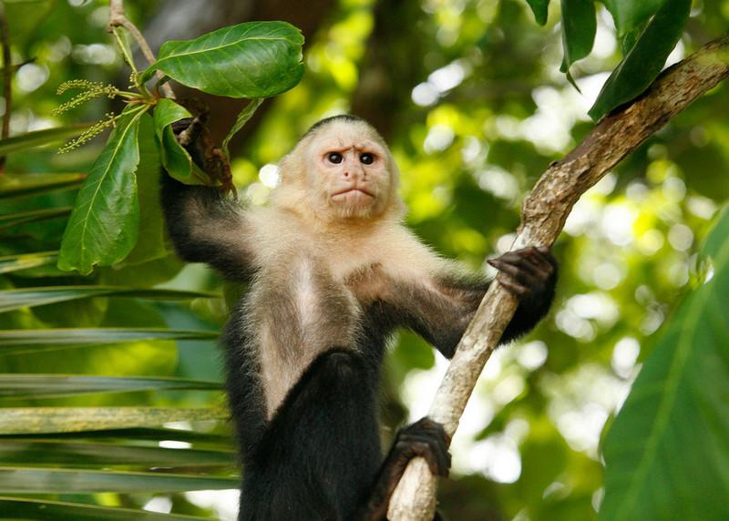 12._Kostarika_je_raj_za_ljubitelje_živali