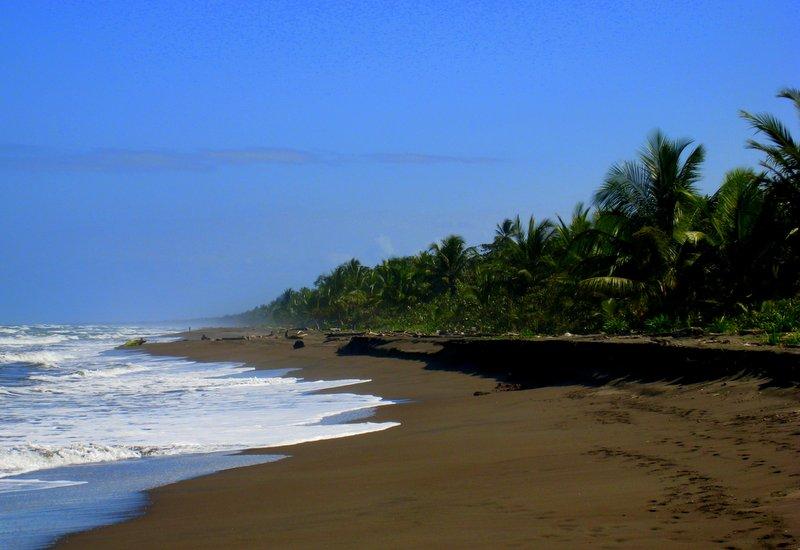 plaža_tortuguero