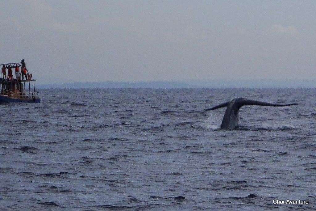 08._gremo_na_ogled_kitov