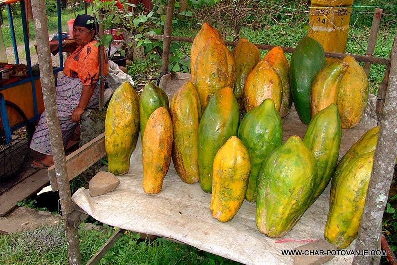 32. ogromne papaye ob cesti