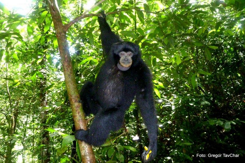 38. lahko bomo videli tudi lemurje