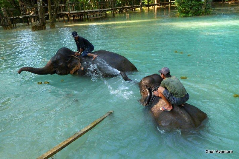 09._umivanje_slonov