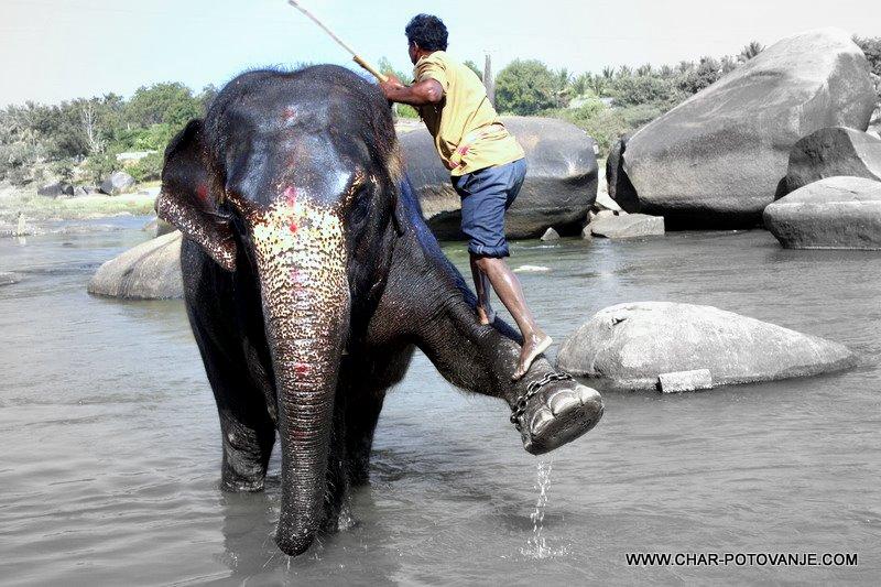27.gremo okopati slone